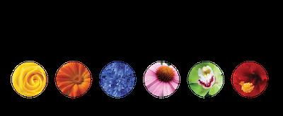 flowerShield_complexLogo-1-1